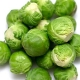 Brussels Sprouts (MX)