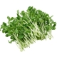 Pea Shoot (Packaged)