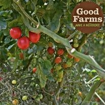 Good Farms / Limited Edition / Andrew Williamson Fresh Produce
